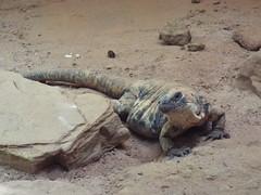 DSCF0168 (Stonehenge 68) Tags: zoo birmingham snake alabama lizard plantation antebellum birminghamzoo arlingtonhouse