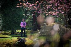 clingendael-7746 (Arie van Tilborg) Tags: japanesegarden hague thehague clingendael japansetuin clingendaelestate landgoedclingendael arievantilborg