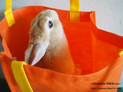P5170333 () Tags: rabbit bunny netherland usagi