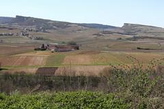 Les 2 roches et le vignoble du Pouilly-fuissé (Chemose) Tags: spring burgundy bourgogne printemps vigne vinyard solutré vergisson pouillyfuisse pouillyfuissé