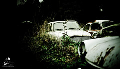 The Car Cemetery (geirkristiansen.net.) Tags: old autumn urban tree classic abandoned nature cemetery graveyard car trash forest vintage lost woods junk nikon rust moody ride sweden decay secret exploring wheels picture rusty forgotten rusted vegetation bil vehicle sverige rotten wreck derelict vestre trespassing urbanexploring ue interestingplaces skrot urbex carcemetery gammel rusten tapt tcksfors forlatt forfall steder delagt smashedup glemt bstns d700 naturetakesback fgelvik nikond700 bilkirkegrd vstrafgelvik forlattesteder portraitofaclassic