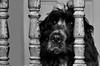 Jailed (Photo Gal 2009) Tags: wood blue portrait blackandwhite dog pet monochrome look gate otis looking timber canine spindles spaniel cocker cockerspaniel woodgrain peer prisoner roan englishcocker theprisoner peering jailed lockedin blueroan lockedout jaildog jaileddog blackandwhitecockerspaniel blueroancockerspaniel woodspindles cockerboy dogprisoner englishshowcocker timberspindels woodgraingatedog gatesafety