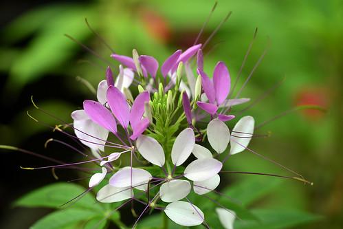 flower garden annual