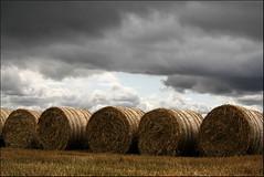 bales (east44) Tags: autumn scotland harvest farmland fields bales blackisle scottishhighlands