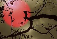 "Harmonie~ (Amiela40) Tags: art nature beauty leaves rose soleil beige noir artistic branches arbres beauté harmony chaud feuilles silouhette branche artistique harmonie chaleur courbe chaude platinumheartaward awardtree bestcapturesaoi elitegalleryaoi ""exoticimage"" ruby10 ruby15 ruby20"