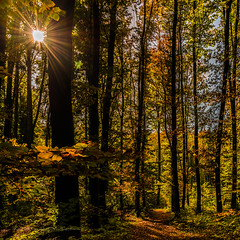 Autumn Light (FotoCorn) Tags: autumn fall nature schweiz switzerland flora nikon suisse natuur dslr bos d800 zwitserland bussigny lan113020131026140932