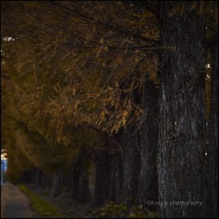 並木の散歩道