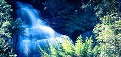 Triplet Falls (jamiepryer) Tags: trip travel blue tree green water waterfall nikon oz australia adventure lee d3200 leefilters jamiepryer