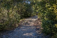 El guante (SantiMB.Photos) Tags: trees winter espaa way rboles camino path glove invierno guante catalua senda osona tavertet 2tumblr sal18250 2blogger