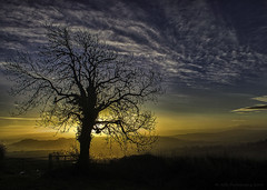 DSC_3814blr (AGB Photography) Tags: mist tree clouds sunrise landscape nikond7000 agbphotography2014