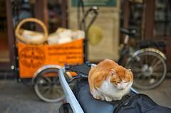 Standing guard...Marais, Paris (sywater) Tags: leica paris cat 50mm marais summilux leicam9 uploaded:by=flickrmobile flickriosapp:filter=nofilter