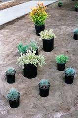 04560022-84 (jjldickinson) Tags: plant garden landscaping longbeach wrigley olympusom1 droughttolerant xeriscaping fujicolorsuperiaxtra400 lawntogarden promastermcautozoommacro2870mmf2842 promasterspectrum772mmuv roll490o2