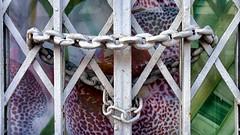 (Philippe Vieux-Jeanton) Tags: metal gate closed lock lareunionisland sonynex3 sel1855 dsc019521311