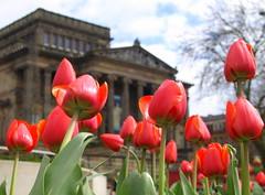 Preston in Bloom - 5 (Tony Worrall) Tags: city flowers red england colour building beauty spring nice pretty colours tour place tulips northwest north grow location lancashire urbannature preston iconic grown bid harrismuseum prestoninbloom ©2014tonyworrall