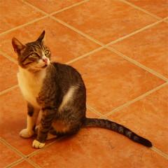 (Zatanen) Tags: cat feline chat pentax greece gato crete gata neko optio katz katt kissa chania felixsilvestris wg2