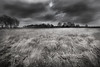 Windy heathland in National Park de Hoge Veluwe (Esquascapes) Tags: nature landscape heather natuur heide landschap heathland landscapephotography nationalparkdehogeveluwe