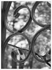 Cedar tree bokeh - HMBT! (karma (Karen)) Tags: trees decorations bw snow home monochrome lights dof bokeh maryland baltimore 4winter cedars ironworks cmwdbw hmbt