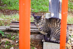 Today's Cat@2016-05-03 (masatsu) Tags: cat pentax catspotting mx1 thebiggestgroupwithonlycats