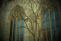 Stephansdom windows (Riina Kik) Tags: vienna trees building texture church outdoor stephansdom reflects