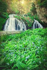 Dess Falls (Iain Brooks) Tags: sunset sun bluebells forest river landscape scotland waterfall highlands nikon stream long exposure aberdeenshire scottish falls iain 20mm dee less starburst brooks sunstar d610 18g iainbphoto