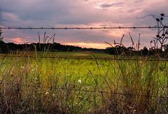 The Sunrise We'll See - HFF (TuthFaree) Tags: light sky green rural sunrise ga fence georgia wire farm elements barbed hff fencefriday