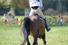 IMG_0190 (dreiwn) Tags: horse horseshow equestrian horseback reiten horseriding showjumping gelnde eventing marbach reitturnier vielseitigkeit reitsport pferdekopf pferdesport springreiten gelndestrecke eventingmarbach