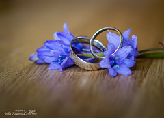 Wedding rings (johnnewstead1) Tags: wedding flower macro olympus ring rings weddingday bluebell tabletop weddingrings em1 weddingphotographer weddingphotography simonwatson tabletopphotography johnnewstead mzuiko simonwatsonphotography simonwatsonphography