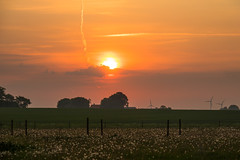 Dandelions at Sunrise (Infomastern) Tags: morning sky cloud sunrise landscape countryside dandelion soluppgng landskap maskros geolocation sdersltt landsbygd geocity camera:make=canon exif:make=canon geocountry geostate exif:lens=efs18200mmf3556is exif:focallength=90mm exif:aperture=71 exif:isospeed=100 camera:model=canoneos760d exif:model=canoneos760d
