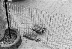 The Tortoise Family (n95lover) Tags: zoo tiere turtle tortoise schildkrte offenbach tmx of waldzoo