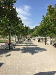 20160505_Baden_i_06 (weisserstier) Tags: park tree baden baum niedersterreich allee loweraustria kurpark baumallee
