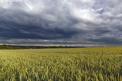 SOMMERGEWITTER BER RAVENSBURG (PADDYSCHMITT.DE) Tags: ravensburg weizenfeld oberschwaben gewitterwolken weststadtravensburg