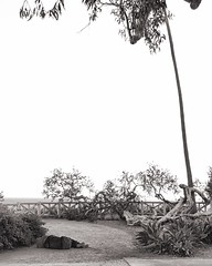 Lay me down (Ryan Vaarsi) Tags: california park sky blackandwhite losangeles santamonica homeless streetphotography palmtree streetpeople mobilephotography wearegryyo
