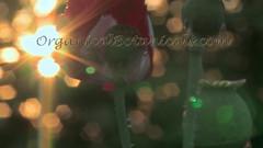 Danish Flag Papaver Somniferum Opium POPPY Pods n Flowers by- OrganicalBotanicals_Com 19 (gjaypub) Tags: flowers plants nature silhouette photography pod photos gardening bees seed seeds poppy poppies growing opium pods cultivation papaver somniferum morphine cultivating papaversomniferum 2016 potency poppyhead alkaloids organicalbotanicals