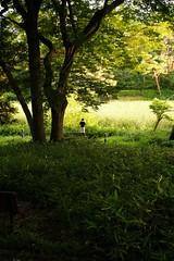 DSCF9939 (keita matsubara) Tags: saitama ohmiya        ohmiyakouen nodasen urbanparkline