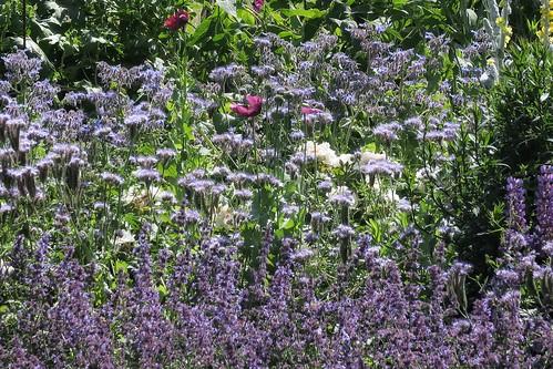 Bee Garden Silloth