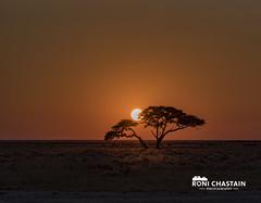 Namibia_060616_0386 (Roni Chastain Photography) Tags: namibia etosha park wildlfe animals africa safari etoshapark