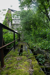 (tannerdouglass2013) Tags: railroad bridge nature train nikon pittsburgh abandon urbanexploration rustbelt urbex natgeo abandonphotography nikond7100