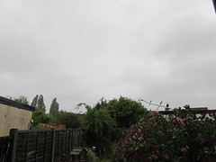 Tuesday, Yuk it's raining IMG_8381 (tomylees) Tags: morning wet weather spring cloudy may tuesday raining essex 31st 2016