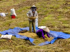 On the job # Vietnam # PICT0902 # KonicaMinolta Dimage G600 - 2005 (irisisopen f/8light) Tags: color digital minolta konica farbe dimage g600 irisisopen