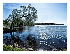 A Swedish Seaview (kurtwolf303) Tags: sea lake seascape tree nature topf25 water reflections see topf50 topf75 500v20f sweden schweden natur skandinavien sverige scandinavia ufer topf100 baum 800views seaview omd sigtuna spiegelungen travelphotography seeblick uppland reisefotografie 750views 1500v60f 1000v40f 250v10f stockholmsln systemcamera unlimitedphotos micro43 microfourthirds olympusem1