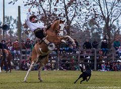 Areco2016_030 (Julio Limardo) Tags: areco tropillas entabladas