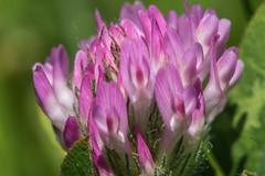 Lo mnimo (cmarga28) Tags: color macro cerca colour flower photography pink naturaleza belleza sencillez nikon raw digital d750