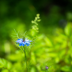 Just the Way you are (*Capture the Moment*) Tags: flowers green dof bokeh grn blau 2016 farbdominanz zeissbatis1885 bluesonya7ii