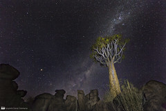 Quiver Tree and Milky Way (daniel.osterkamp) Tags: asphodeloideae kokerboom namibia star stars africa aloe aloedichotoma astronomy blue deepspace dichotoma exposure giantsplayground landscape landscapephotography light long longexposure mars milkyway nature night quivertree rocks sky south starry startrails stones tourism trails tree kcherbaum quiver