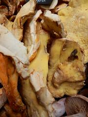Chicken of the Wood Mushrooms, Turnips, Borough Market, Southwark, London (1) (f1jherbert) Tags: food fish london vegetables fruit mushrooms nikon market herbs boroughmarket sausages coolpix borough southwark pate nikoncoolpix southwarklondon boroughmarketlondon s9700 boroughmarketsouthwark boroughmarketsouthwarklondon coolpixs9700 nikons9700 nikoncoolpixs9700