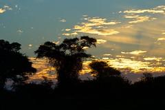 Zambia_  20162016-05-0216-40-46 (C_Baltrusch) Tags: christian safari afrika zambia sambesi selfdrive sambia zambeziriver baltrusch