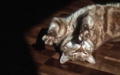 Once there was Flash (Explore June 20, 2016) (Anne Worner) Tags: cat happy feline upsidedown tabby flash paws stretching enjoyment claws tomcat onthefloor ecstatic inthesun anneworner
