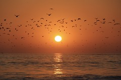 Up With the Birds (emmmmpai) Tags: birds migration sunset sun bright ocean water sea waves sky dawn california dana point danapoint summer beautiful surf colorful outside outdoors nature