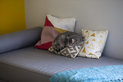 0619 Bokeh sleeps on a pillow (movies05) Tags: sleeping cats cute bed funny bokeh sleep pillows pillow couch asleep denton daybed cb2 project365