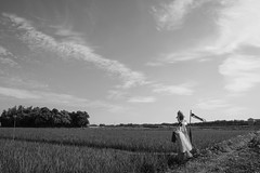Fine sky over paddy field (odeleapple) Tags: sky bw nikon rice paddy scarecrow af nikkor 28105mm d810